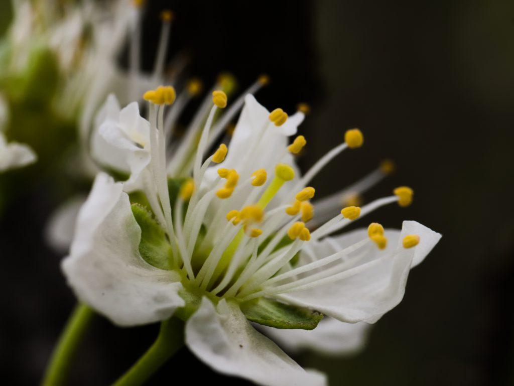 Flowers Macro Close-up