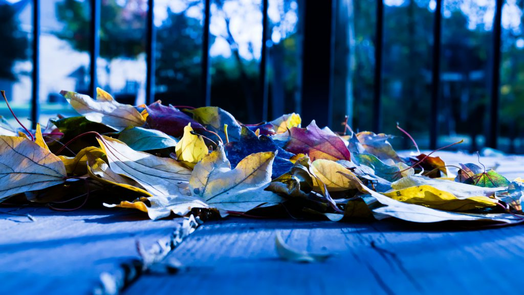 Backyard leaves - Nov 2018